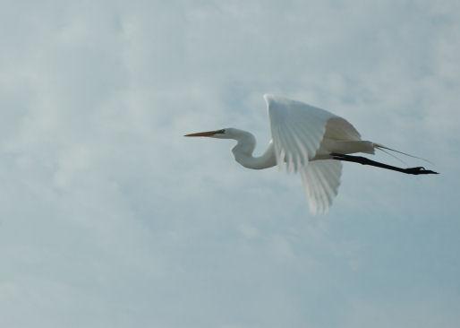 bird_4514q.jpg