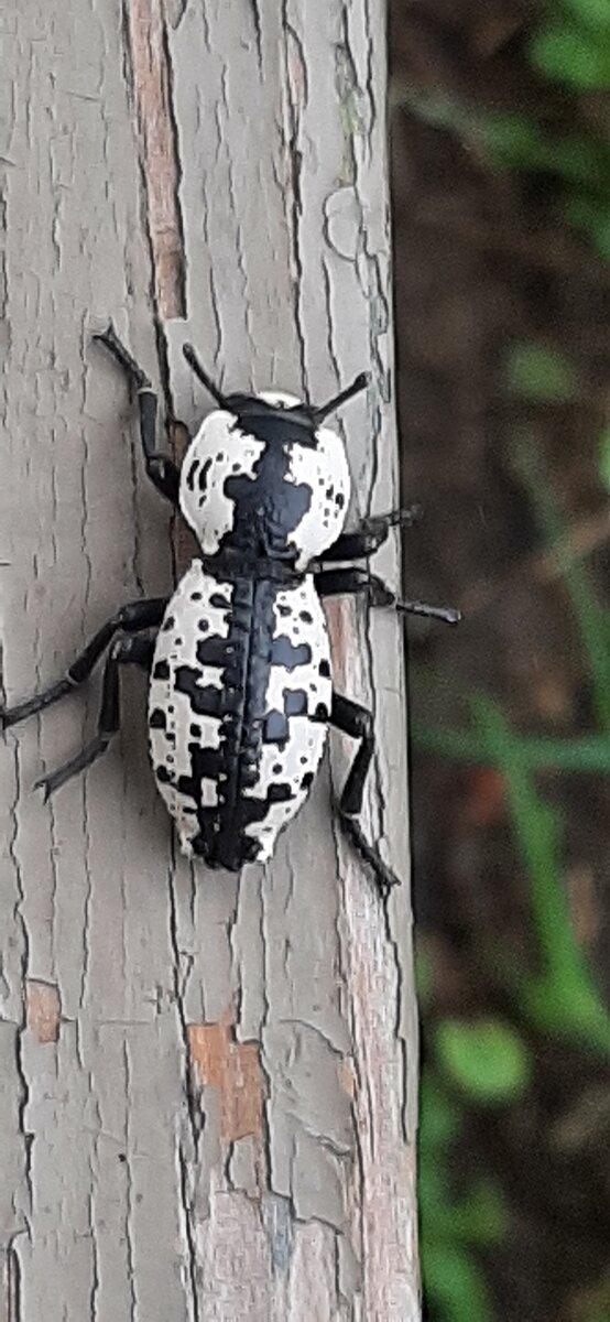 bug 5-24-21.jpg
