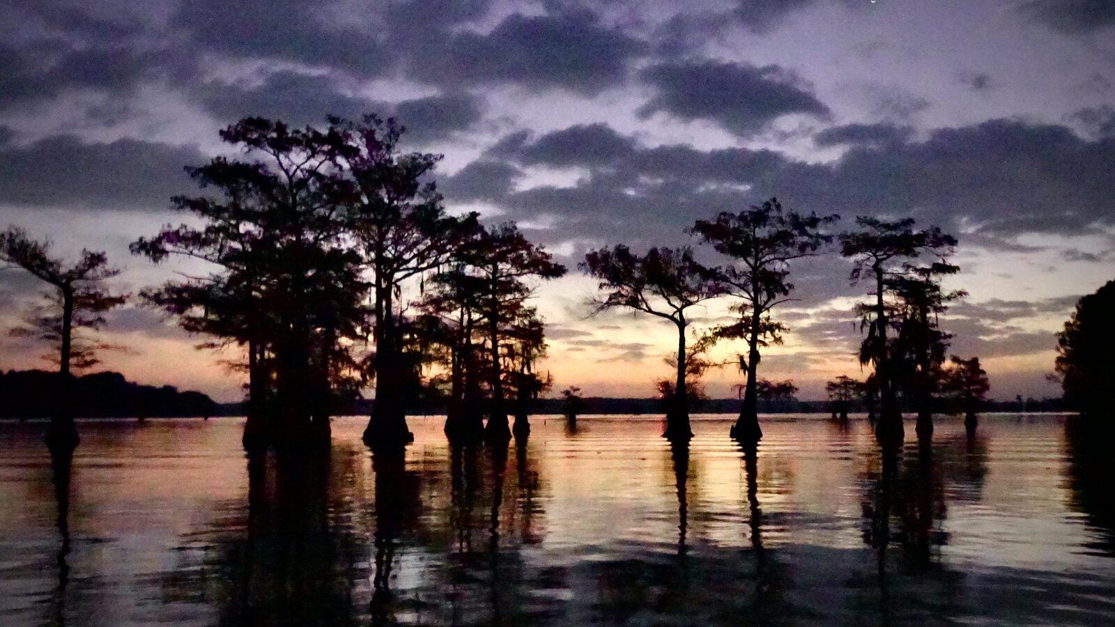 Caddo Lake Dawn.jpeg