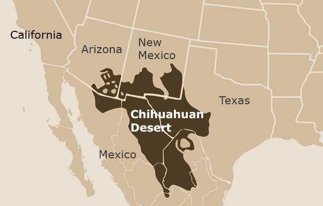 chihuahuan.jpg