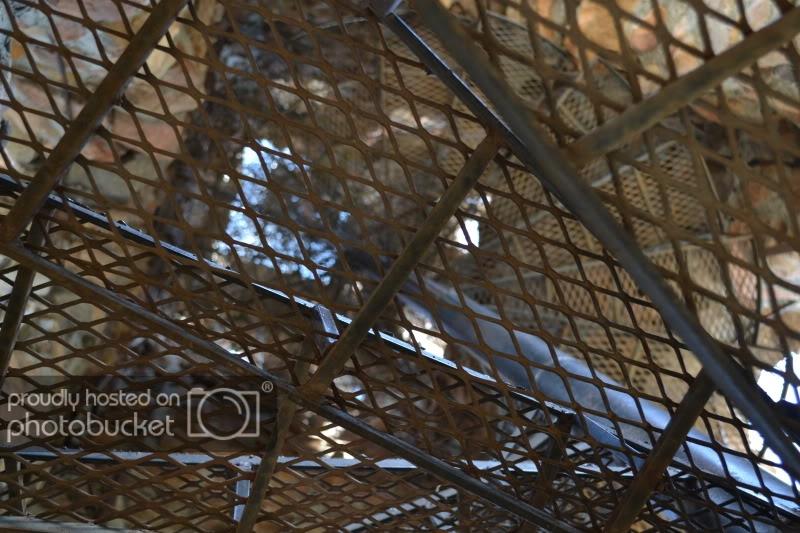 ColoradoTrip20111103.jpg