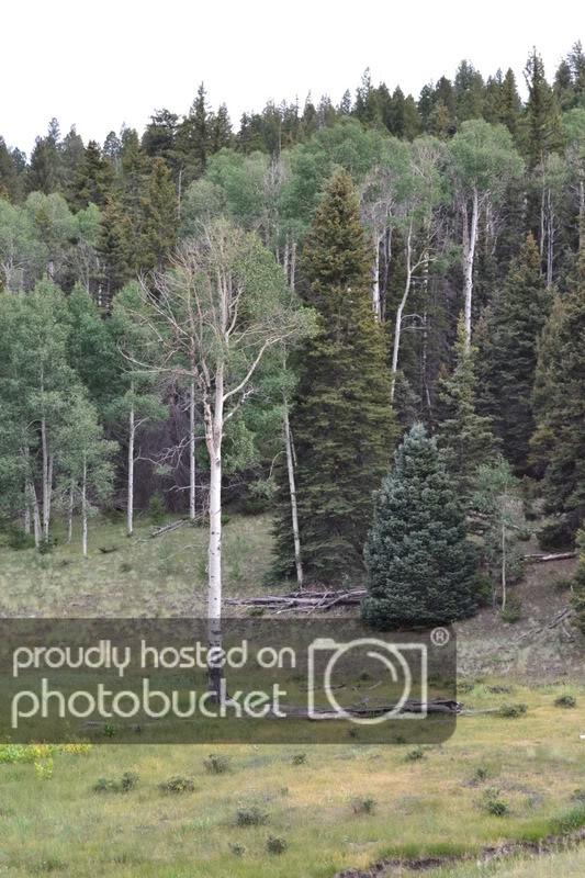 ColoradoTrip2011143.jpg