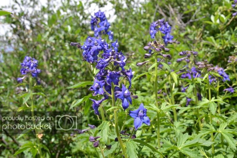 ColoradoTrip2011364.jpg