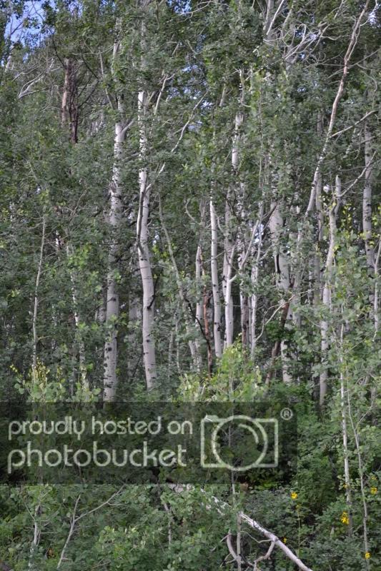 ColoradoTrip2011608.jpg