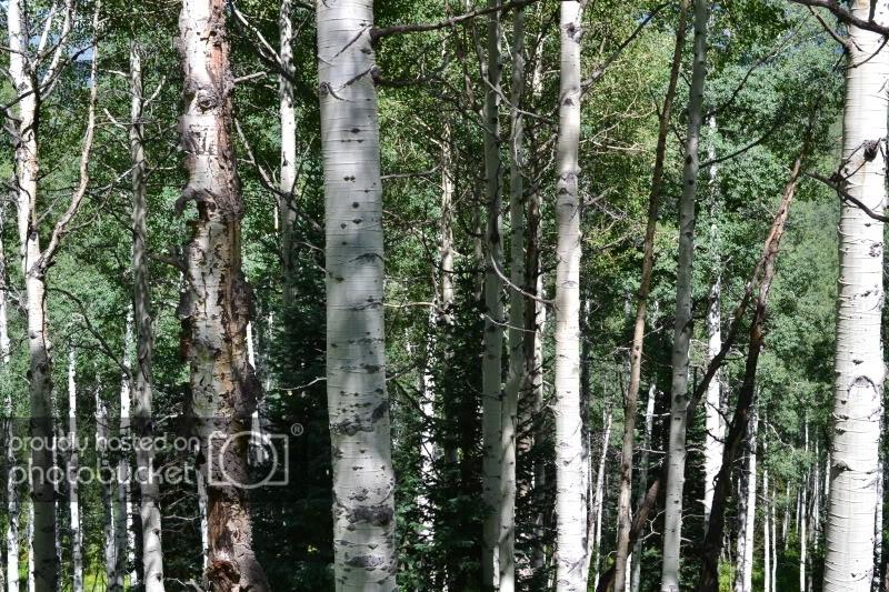 ColoradoTrip2011788.jpg