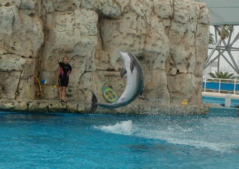 dolphin_4500q.jpg