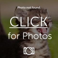 espringsmapscreenshot.jpg