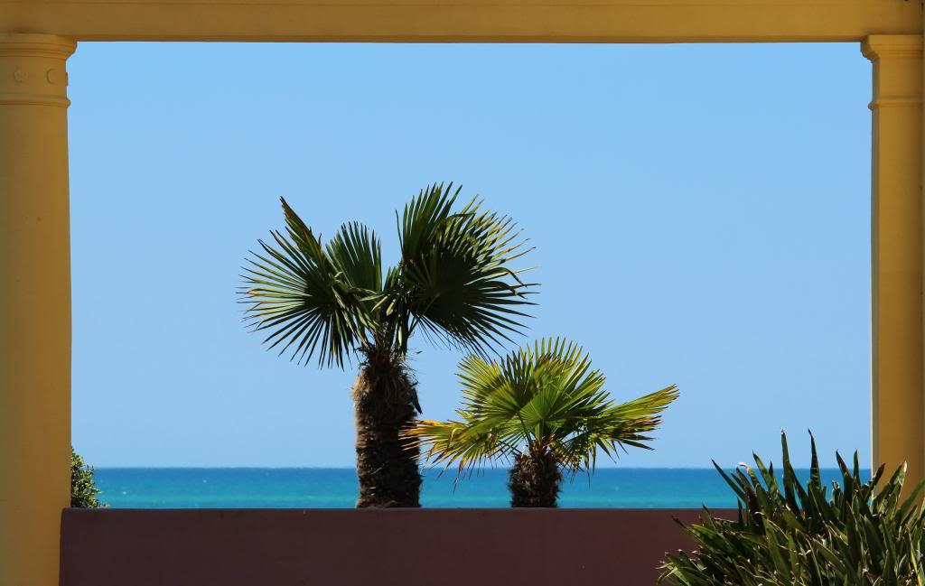Palms_zpsa9f1c940.jpg