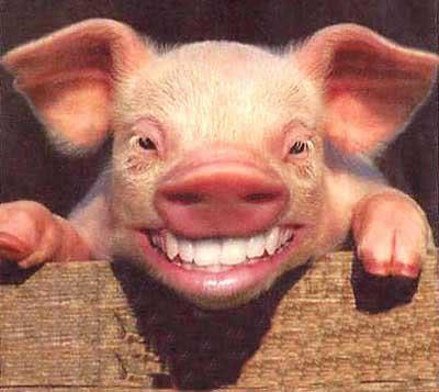 PigSmile.jpg
