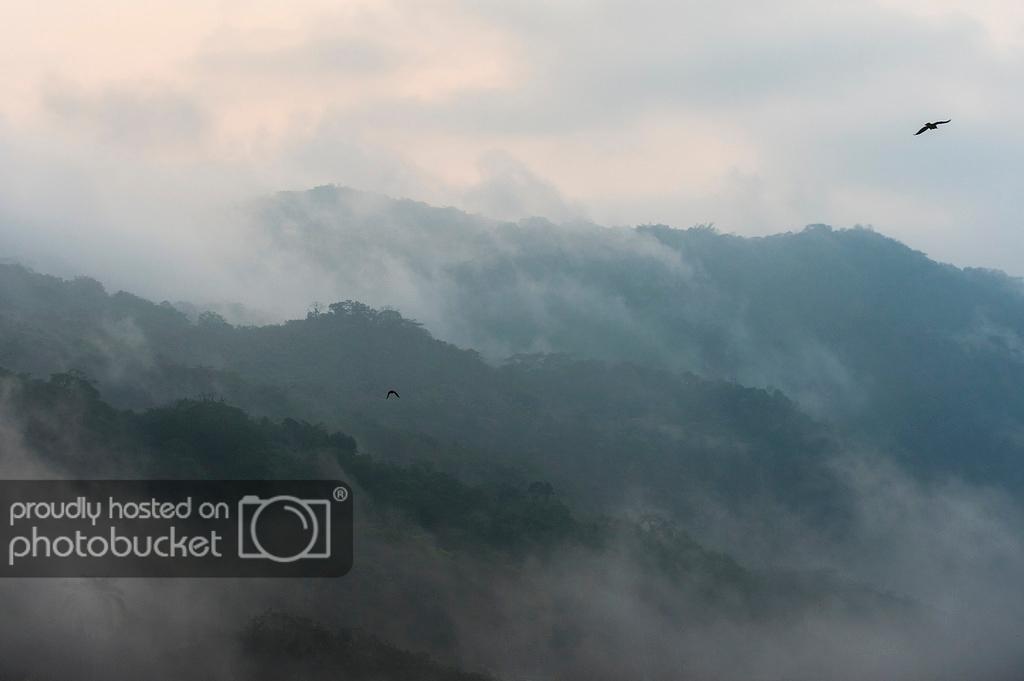 webfog_mountains_x.jpg