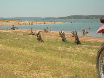 LakeBuchananstumps.jpg