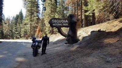 Sequoia national park.jpg